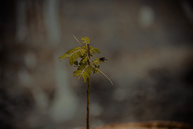 A small plant