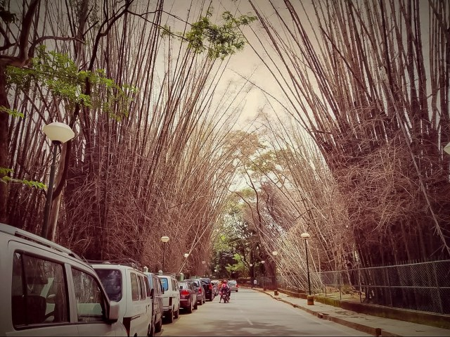 Bamboo Arch Stick in Road