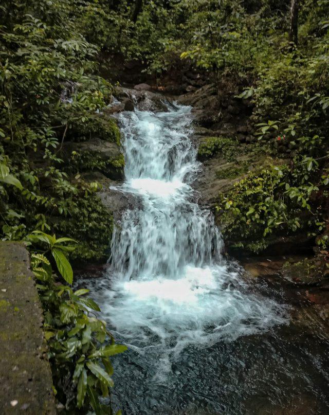 Mini waterfall amidst wilderness.