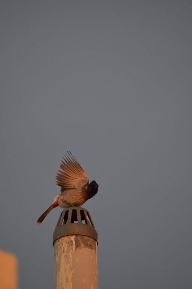 Bird getting ready to fly