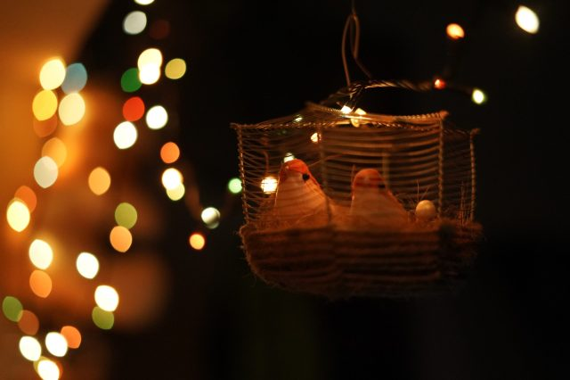 Diwali Lights and Birds