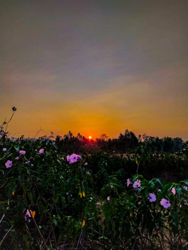 sunset view from a meadow