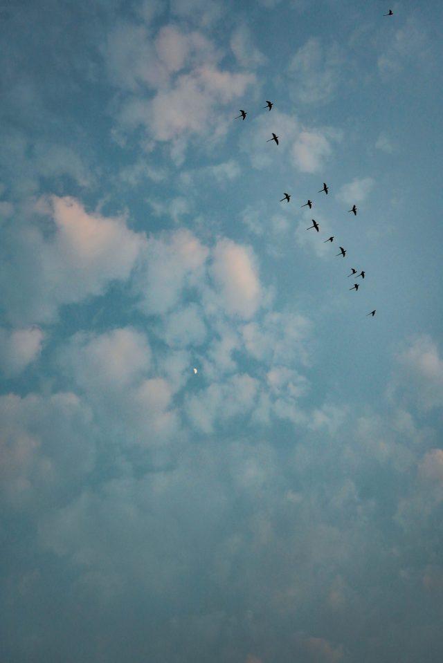 Birds Fly High In Sky