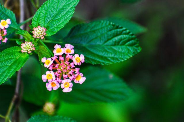 Beautiful small flowers