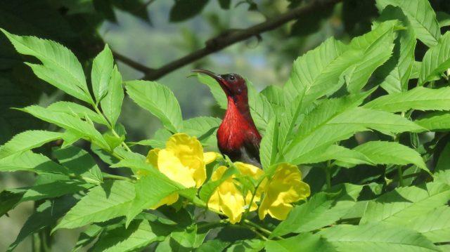 Perching Bird on Flowering Plant