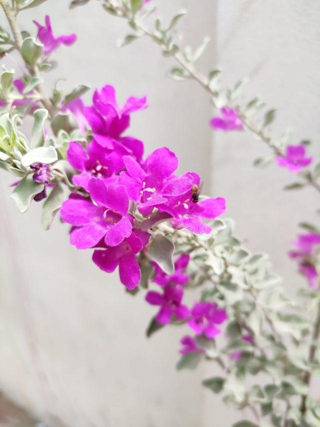 Pink Flower on Focus