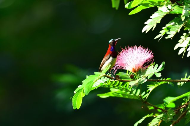 sunbird perched on branch