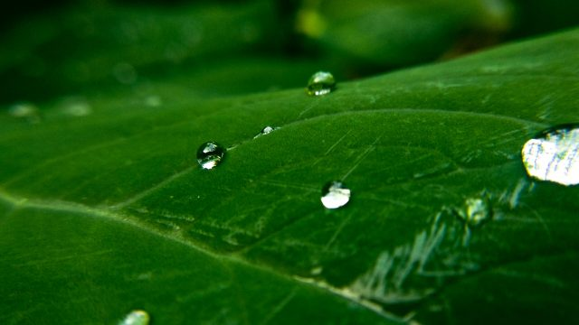 Raindrops that touches the leaf