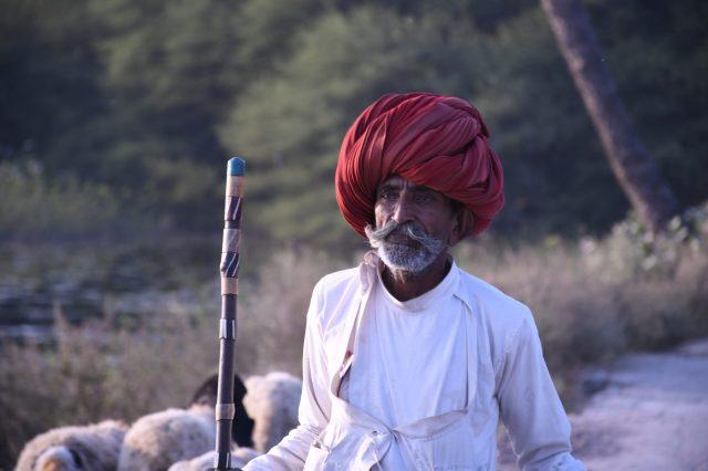 An old shepherd gazing his goats