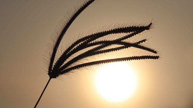 Silhouette of plant against the sun