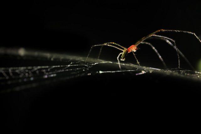 Spider in a dark place