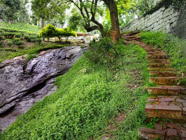 Stone steps in a park