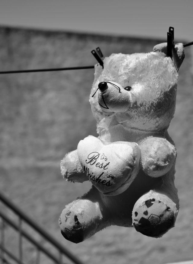 Teddy bear drying in sunlight.