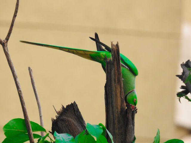 A parrot sitting on a shrub