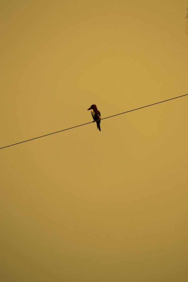 Woodpecker perched on a wire