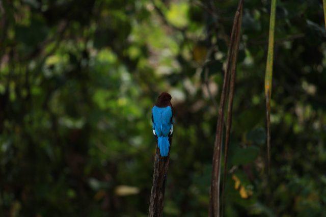A bird sitting on a wood