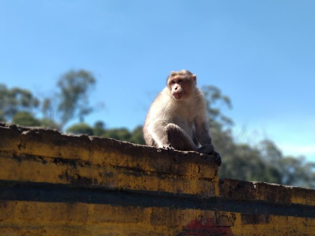 A monkey on rooftop