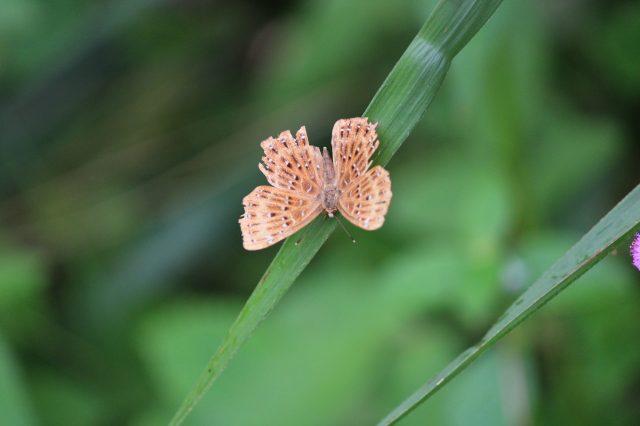 A tiny butterfly on a leaf