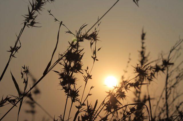 Sun through grass straws