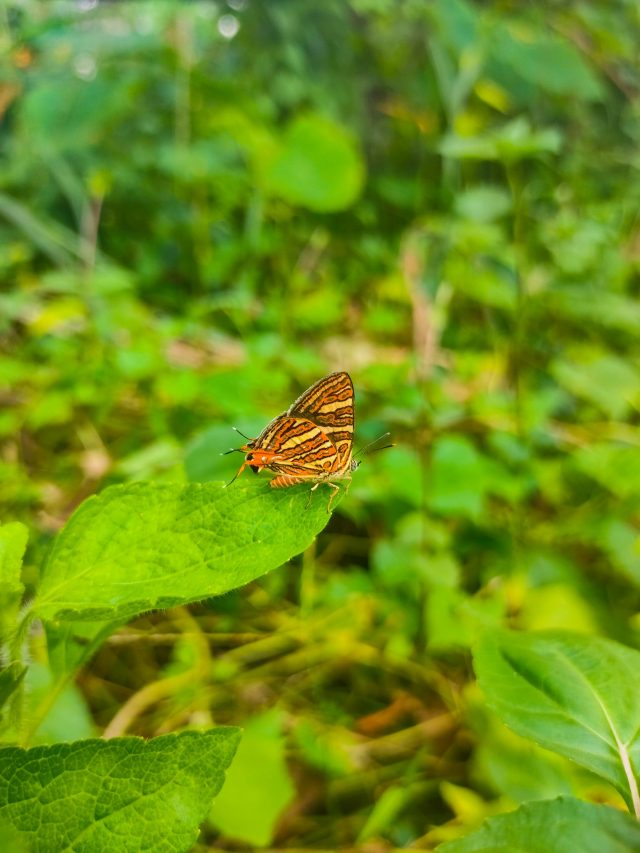 Yellow Butterfly Close-up