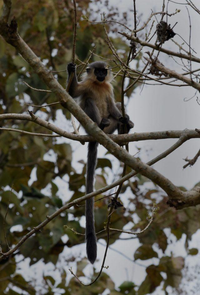 Baboon on tree