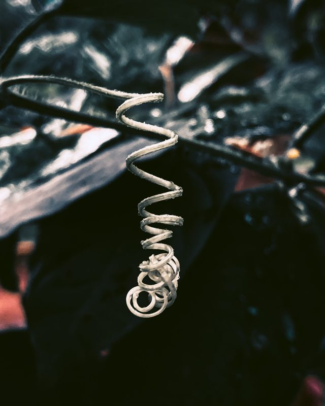 close-up of a tendril