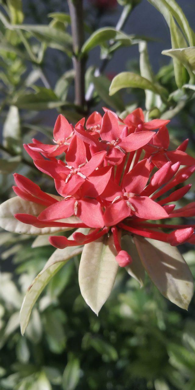 Blooming Red Flowers