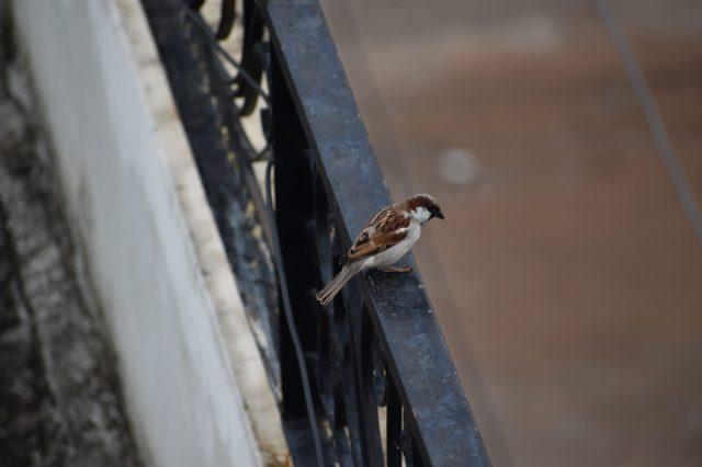 bird on a railing