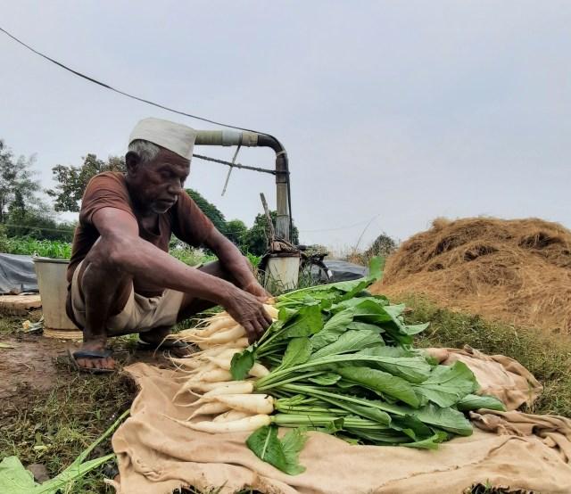 farmer cleaning vegetable