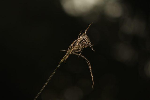 A broken flower stem