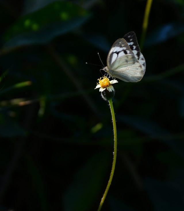 a butterfly on wildflower
