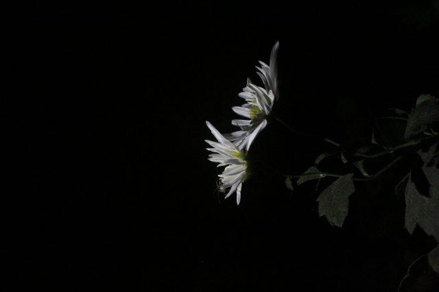 Flower portrait in dark