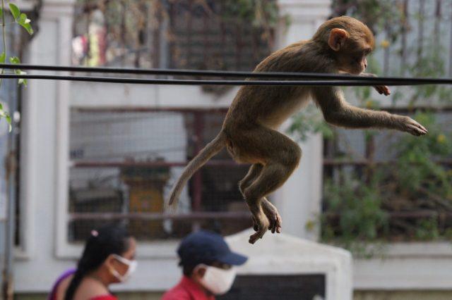 A baby monkey