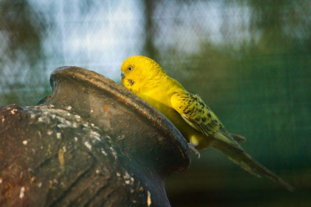A love bird