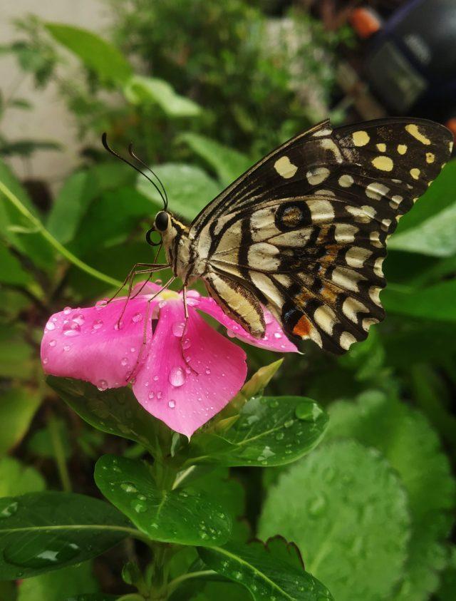 Butterfly on flower