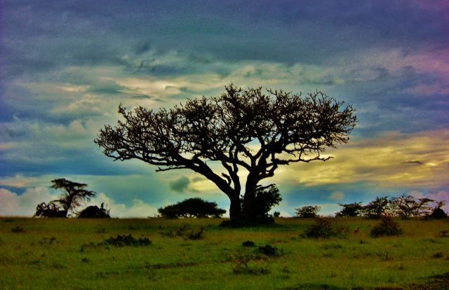 A tree in a pasture