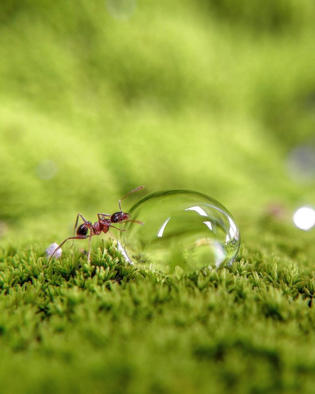 Ant on water drop