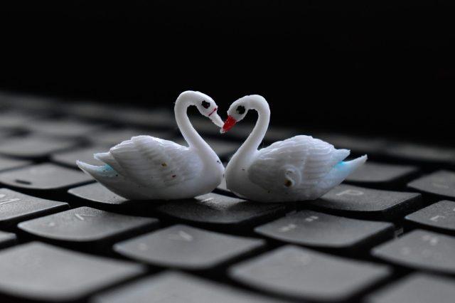 Toy swan pair on key board