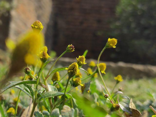 Plant in farm