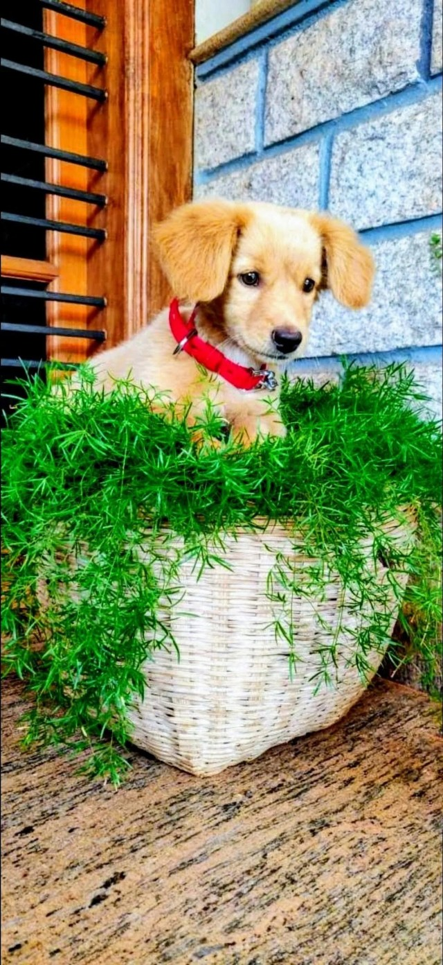 A puppy on houseplant