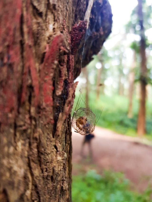 Spider in spider web