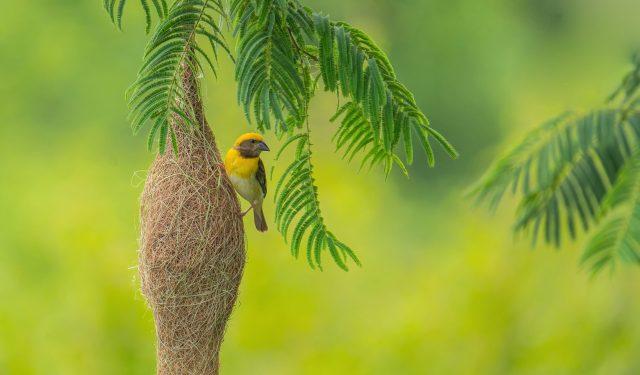 a bird on its nest