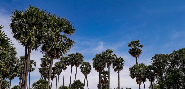 palm trees and the blue sky