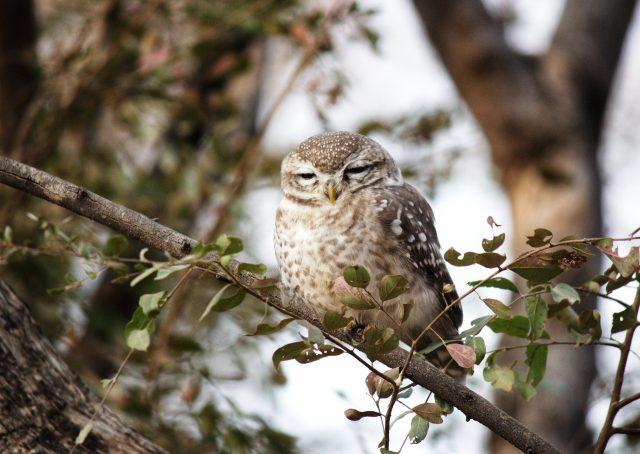 owl on a tree brach