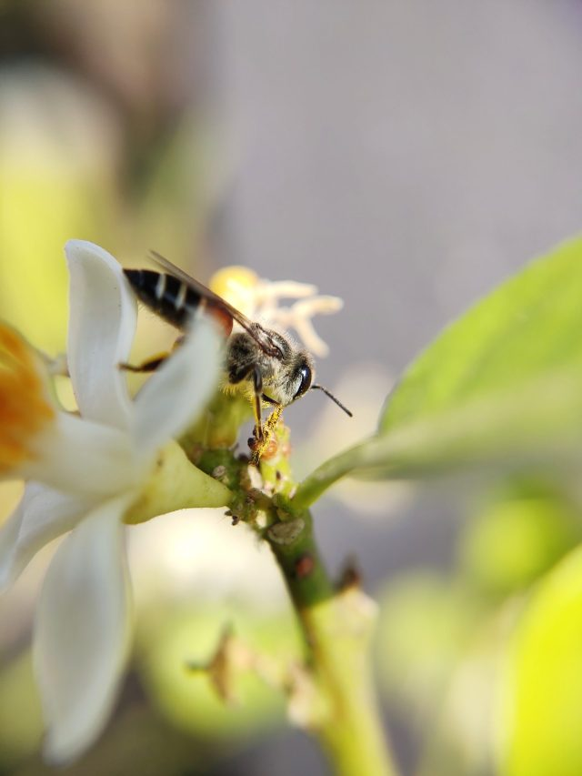 A bee on flower pollens