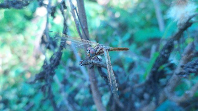 A dragonfly on plant leaf