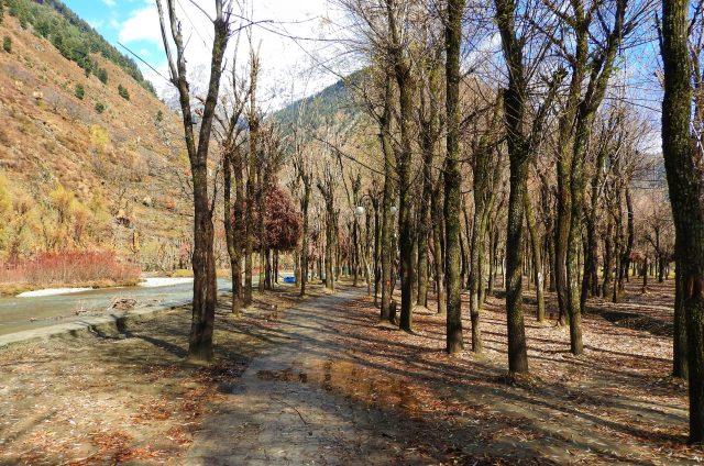 Dry trees near the road