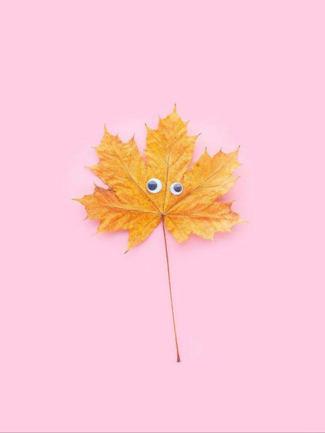 Eyes on leaf
