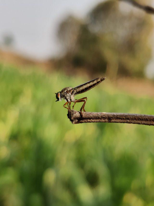 An dragonfly on a twig