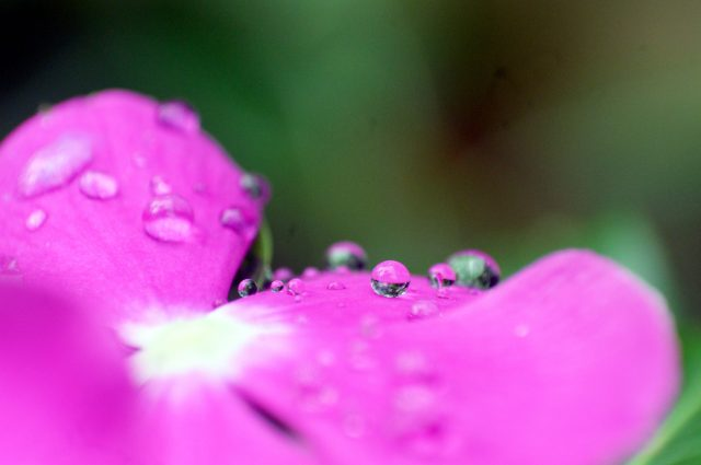 Dew on the flower
